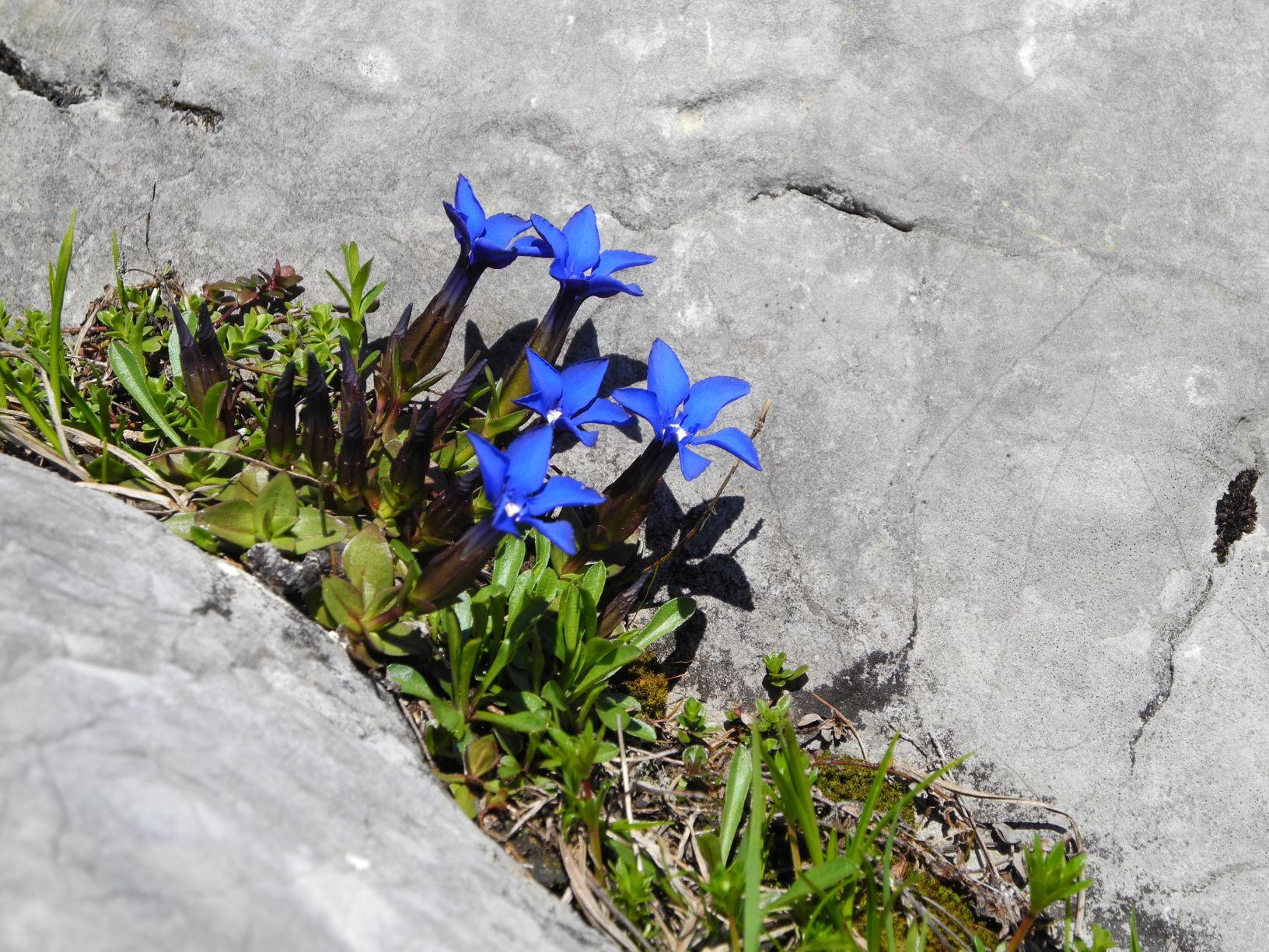 Etappe 25: Pühringerhütte – Loserhütte