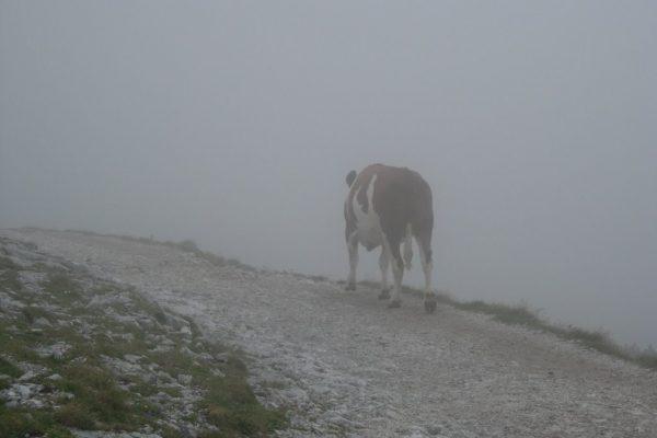 20060813-schneeberg-19